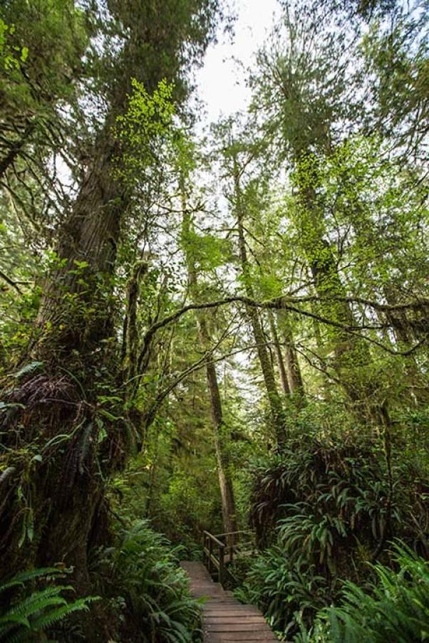 Ein toller Trail durch den Regenwald.