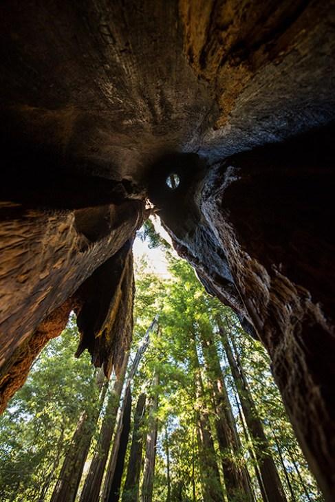 Der Chimney-Tree: von Blitzschlag ausgebrannter Redwood-Tree.