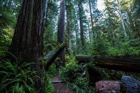 Redwoods: Finde Irene.