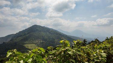 Kaffeeplantagen in El Salvador.