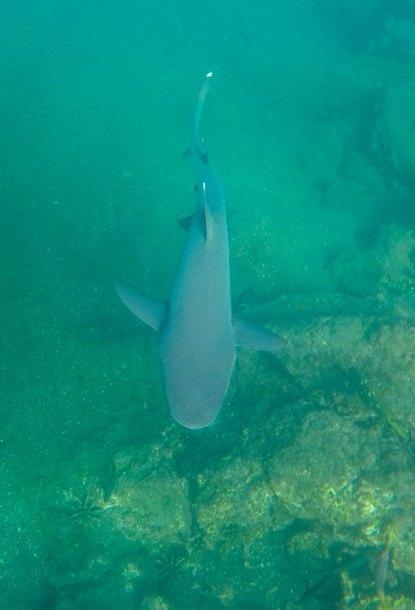 OK, den Whitetip-Shark kennen wir schon.