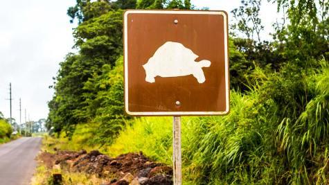 Schnell sind sie ja nicht... darum mahnen Schilder zur Vorsicht.