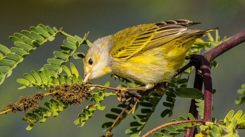 EIn Paradies für Ornithologen.