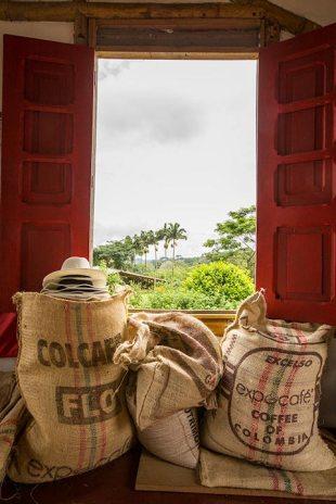 Schöne Kaffeetour in der Finca Guayabal.