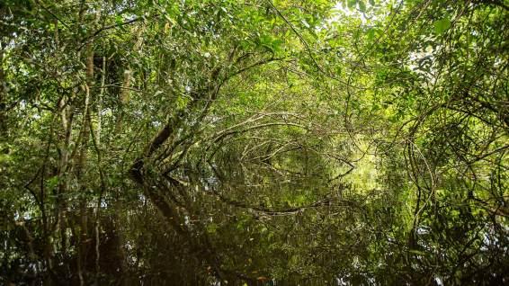 Wir paddeln durch den Dschungel.