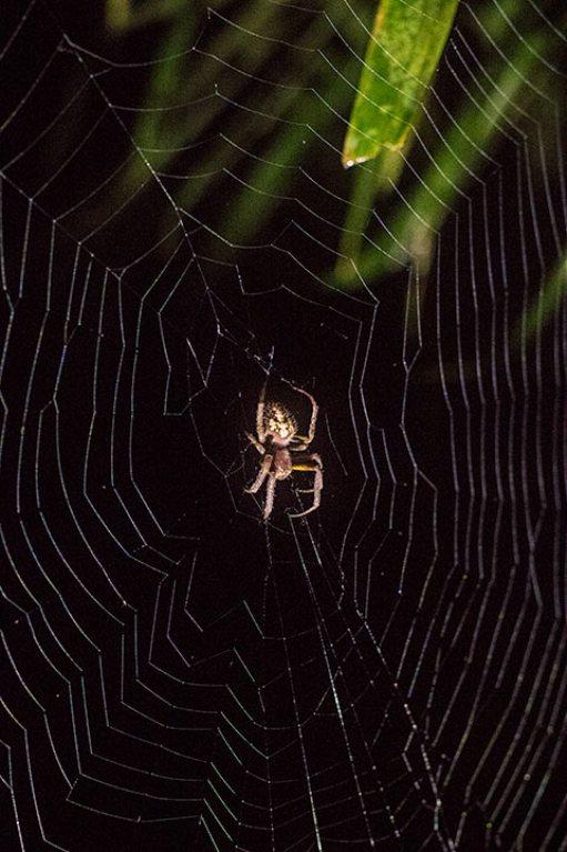 Spinnen hat's überall.