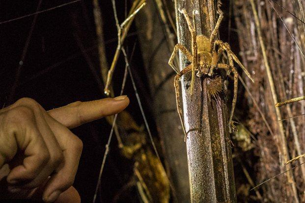 Nichts zum Spielen: diese Spinne kann tödlich sein.