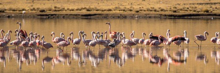 In vielen Seen finden sich Flamingos ein.