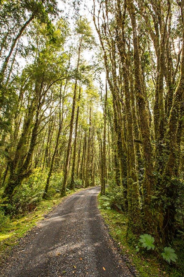 Dichte, regenwaldähnliche Vegetation umgibt uns beim Fahren…
