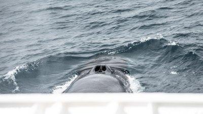 Die Spielverderber suchen Schutz beim Boot.