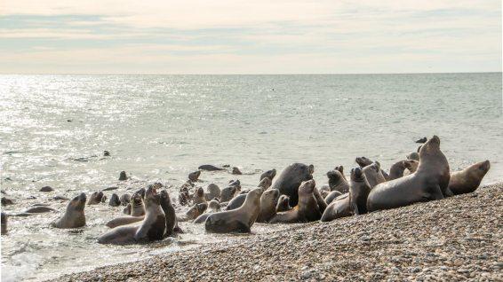 Geht erstmals einer an den Strand, so folgen ihm alle!