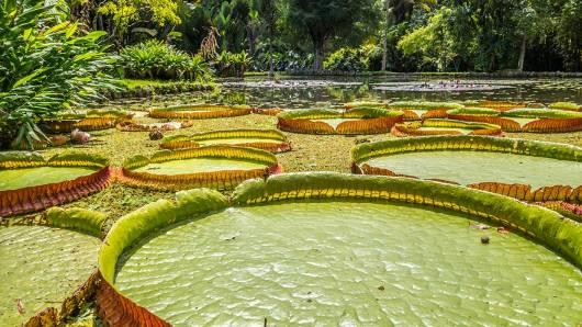 Seerosenteich im botanischen Garten in Rio de Janeiro.