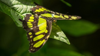 OK, es gibt ca. 160'000 verschiedene Schmetterlingsarten. Hier einer davon.