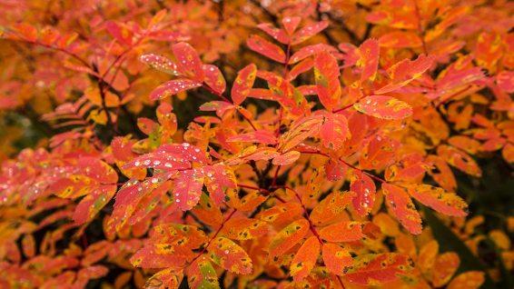 In dieser Region fängt die Herbstfärbung am frühesten an.