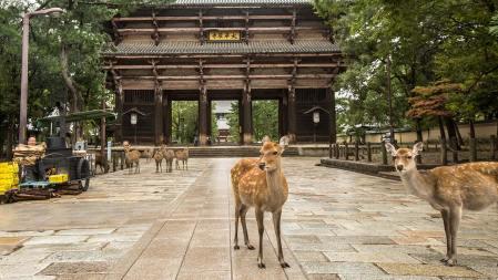 Reh-Tempel.