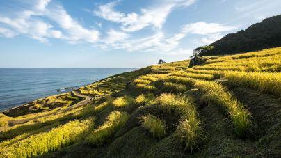 An diesem Küstenabschnitt werden seit Jahrhunderten über 1000 kleinste Reisfelder traditionell bewirtschaftet.