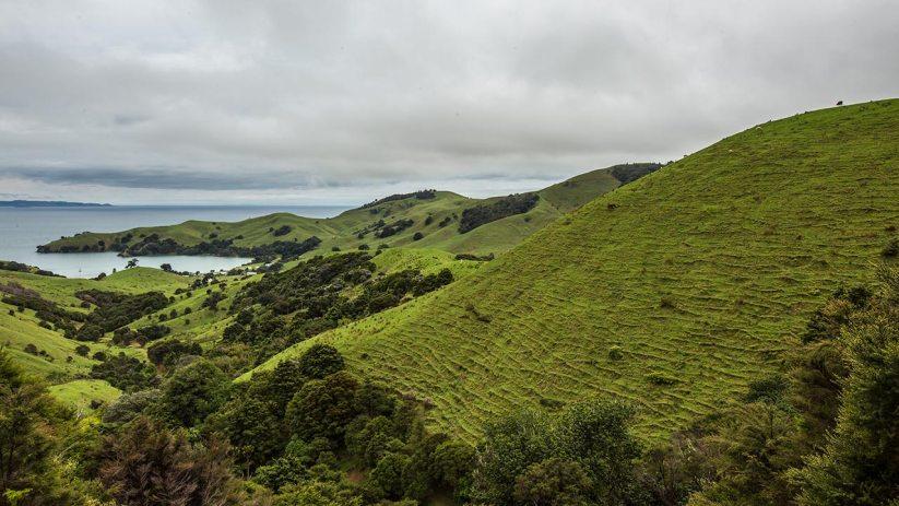 Neuseeland, wie man es sich vorstellt.