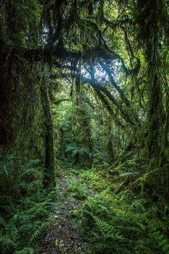 Einsame Regenwald-Wanderung.