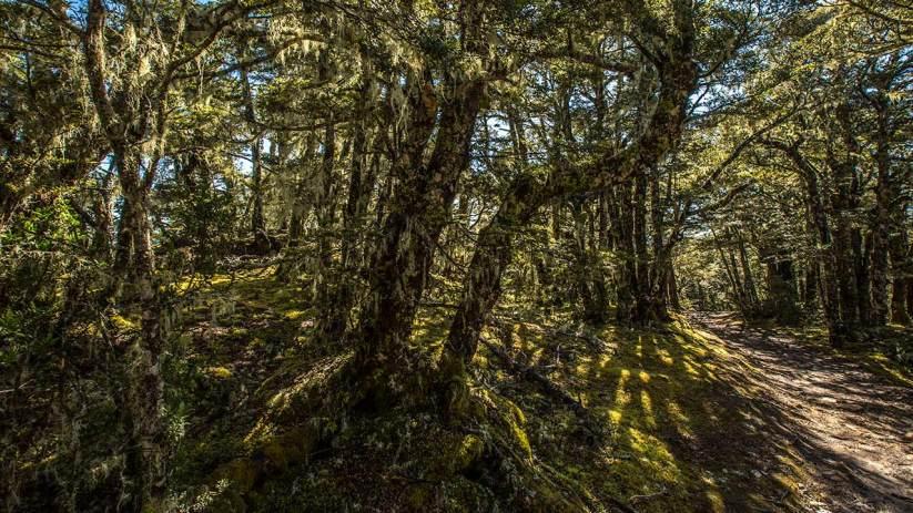 Durch einen verwunschenen Wald.