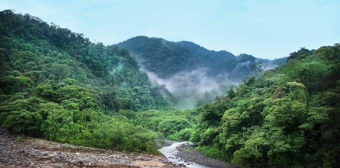 WWF Rainforests