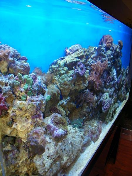 acrylic-fish-tank-015