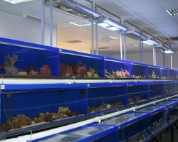 acrylic-fish-tank-030