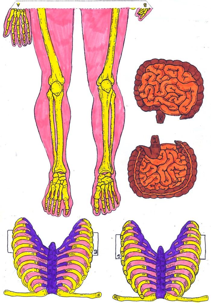 esqueleto-2