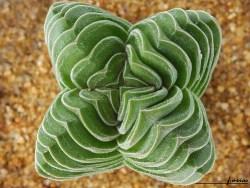 simetria-natural-05