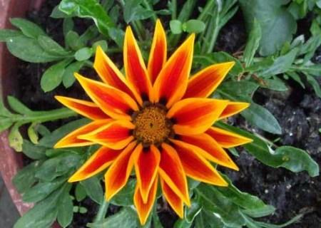simetria-natural-09