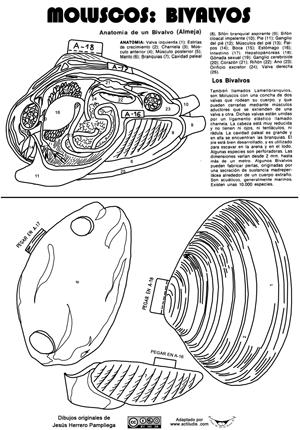 Recortables anatomía invertebrados - Actiludis