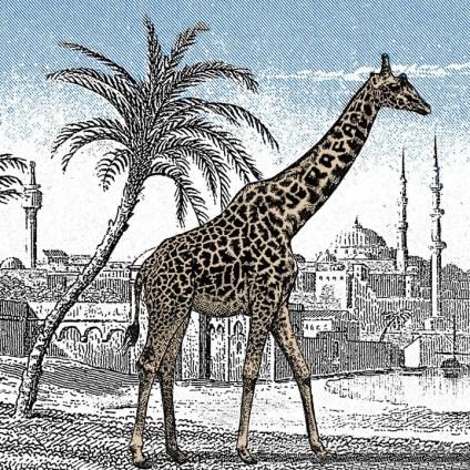 dónde está la otra jirafa