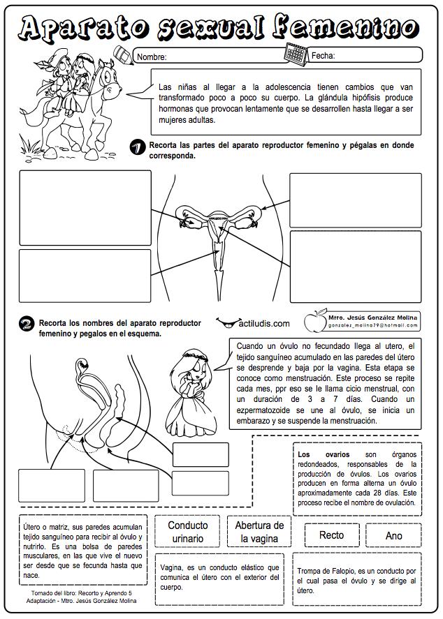 Aparatos sexuales - Actiludis