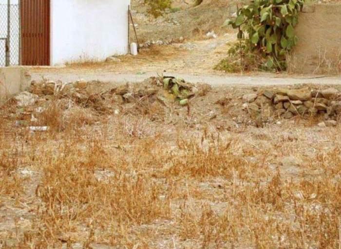 gato oculto 2