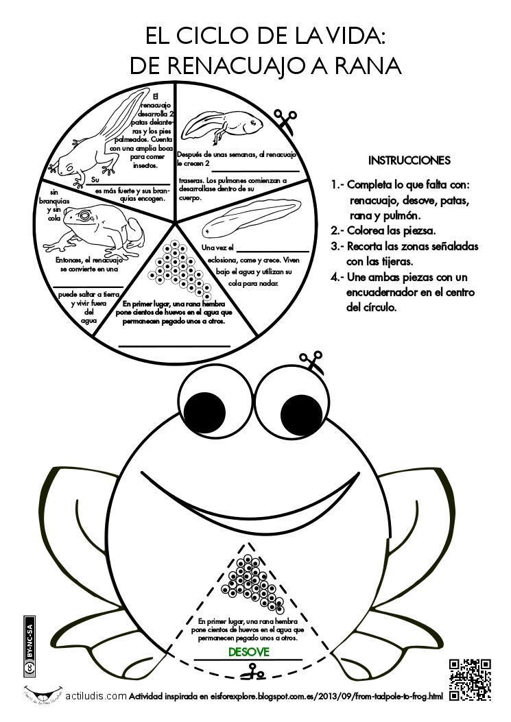 De renacuajo a rana - Actiludis