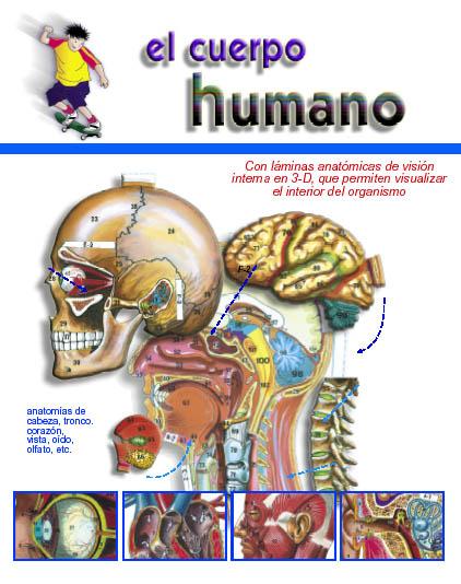 1-Cuerop humano