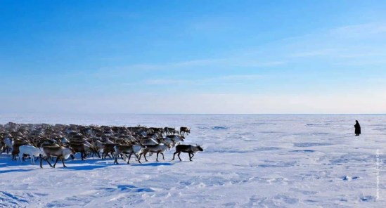 Nenets Reindeer Migration expedition, 17 Days, Culture, Siberia