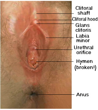 hymen breaking