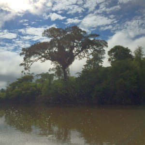 A look at the Amazon jungle from the motorized canoe