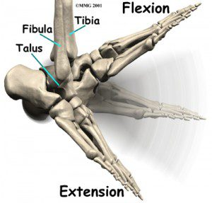 ankle_osteoarthritis_anatomy02-300x287