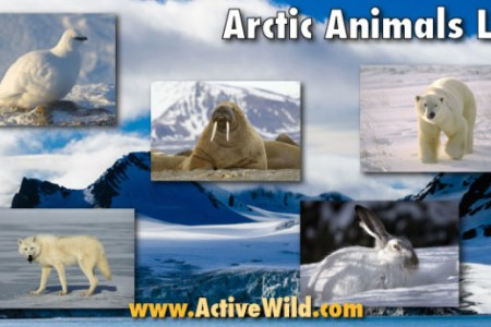 animals start with e animals name path decorations pictures full