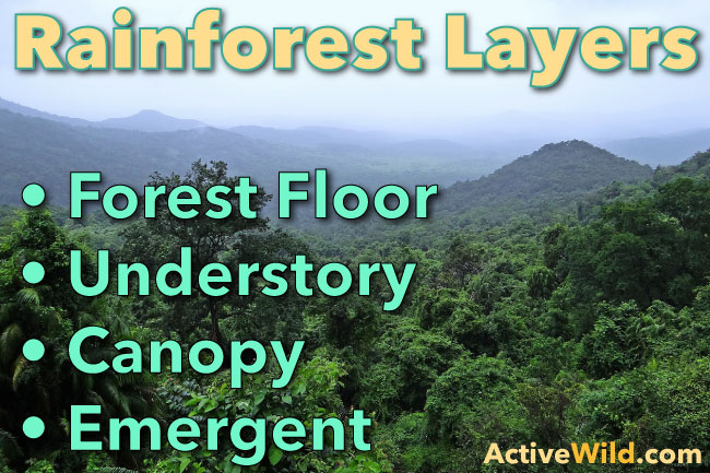 Every editorial product is independently selected, though we may be compensated or receive an affiliate commission if you buy something t. Rainforest Layers Discover The Layers Of A Rainforest Facts Pictures
