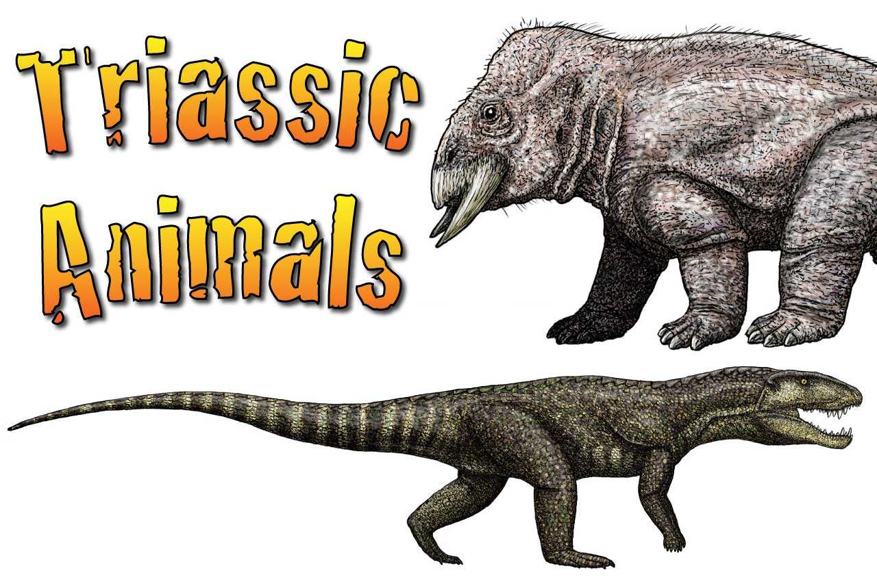 Triassic Animals Discover The Animals That Lived In The