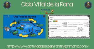 El ciclo vital de la Rana