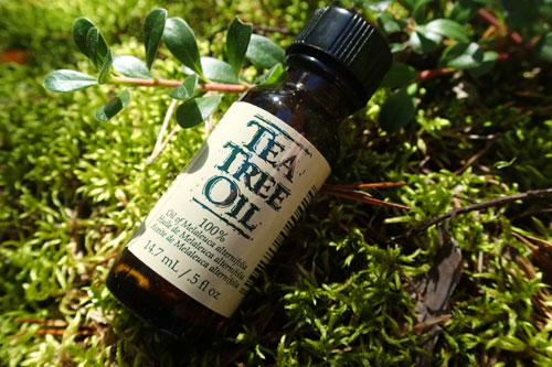 The Miracle Of Tea Tree Oil 80 Amazing Uses For Survival