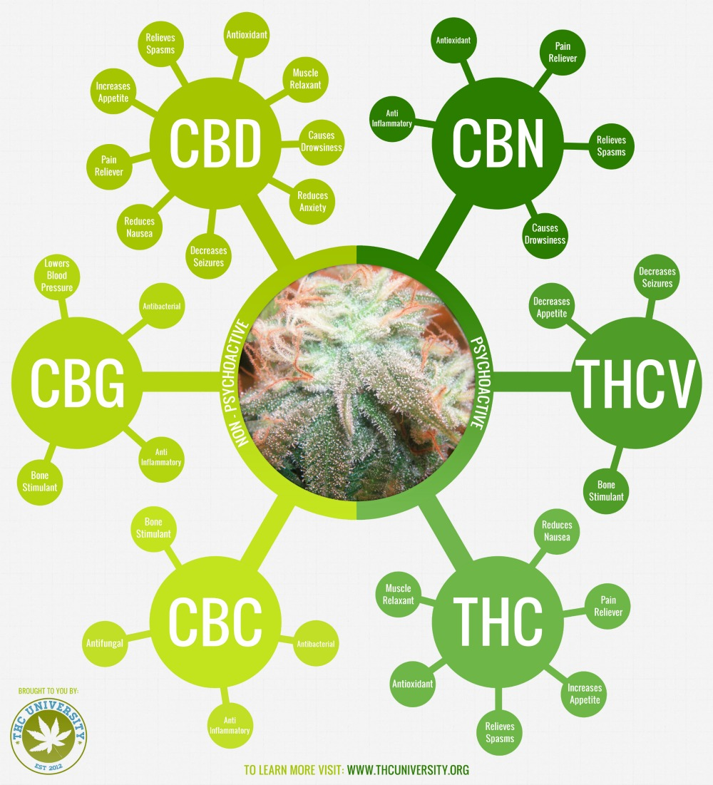 effects of cannabinoids