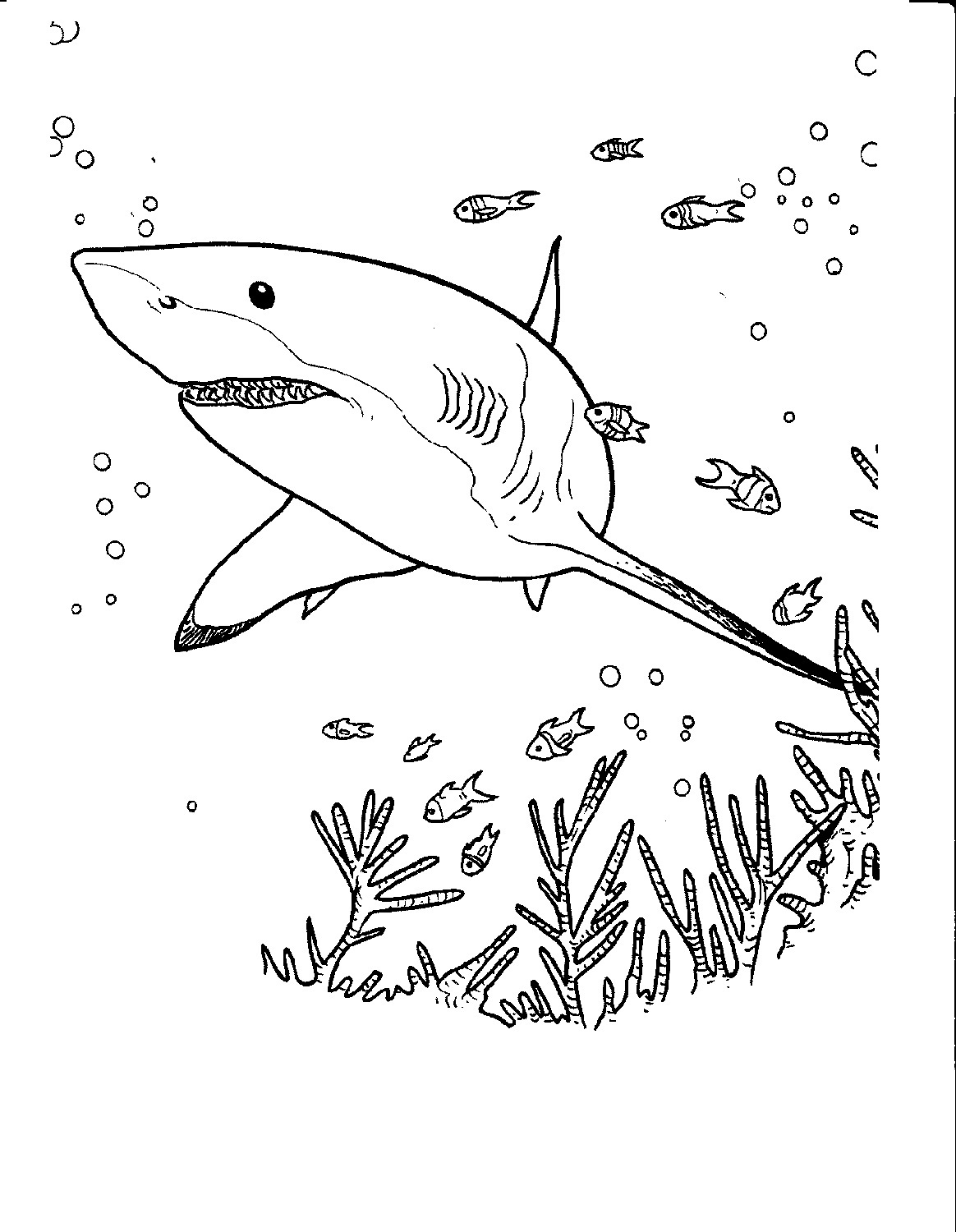 Free Shark Color Pages
