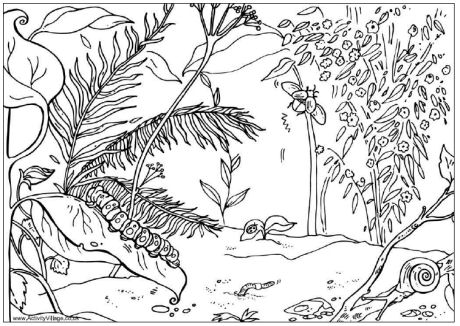 Minibeasts Colouring Page
