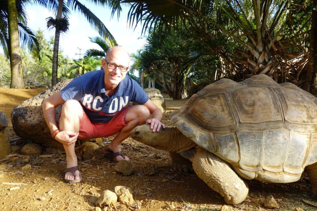 Mauritius tortoises