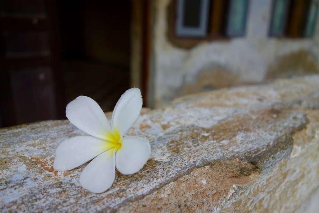 Flower Tuol Sleng