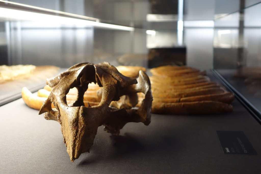 Time skull museum